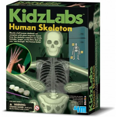4M KidzLabs Human Skeleton